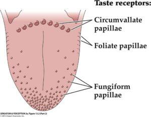 using a tongue scraper